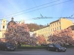 モーツァルトの住居と三位一体教会の前にある満開の木蓮
