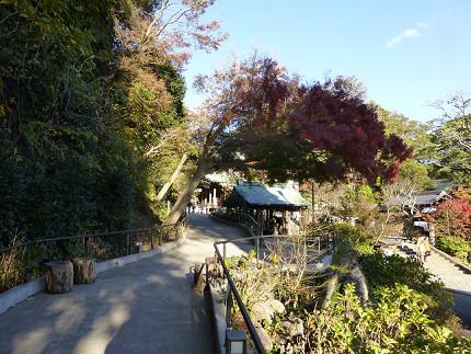 鎌倉宮の紅葉.jpg